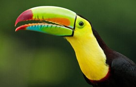 The colourful toucans are a delight to observe