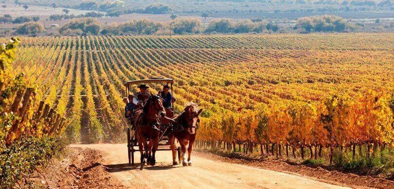 Vineyard tour in Chile