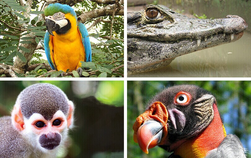 Wildlife on Brazilian Amazon Cruise