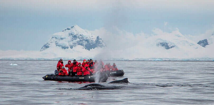 best time to visit Antarctica - february