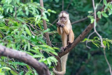 Monkeys are one of the many species to observe