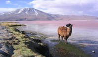 3966 Lagoons Of The Southern Altiplano