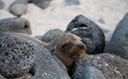 3158 Getting Closer To Nature: My Week In The Galapagos