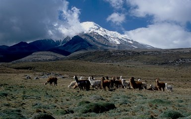 Riobamba & Avenue of Volcanoes - Ecuador Holidays