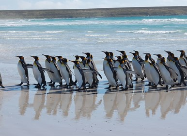 Island Hopping Tour - Falkland Islands