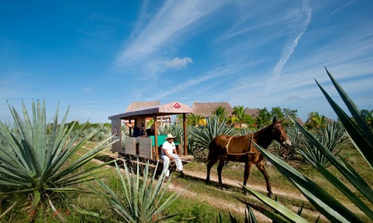 The Sisal Tour - Holidays to Mexico
