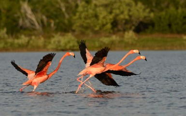 Nature and Wildlife in Mexico's Yucatan Peninsula - Mexico Articles