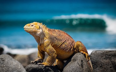 Galapagos Islands - Expedition Cruises Holidays