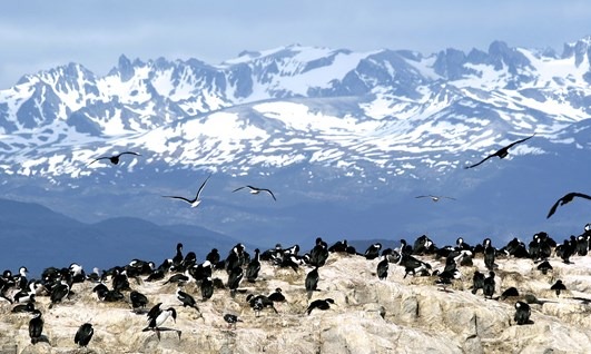 The Azul Tour - Punta Arenas & Tierra del Fuego - Holidays to Chile
