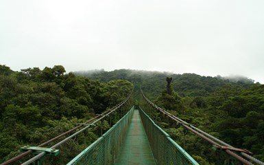 Monteverde Cloud Forest - Birdwatching Holidays