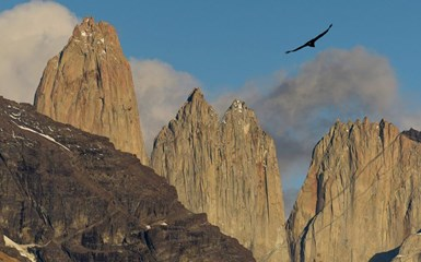 Where to see Condors in South America - Chile Articles