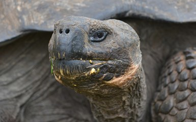 Darwin & the Galapagos Islands - Ecuador Articles