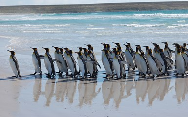 Where to see penguins in the wild - Chile Articles