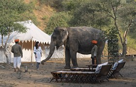 Spend Time With Elephants, It Could Change Your Life