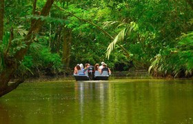 Canals through the tropical forest