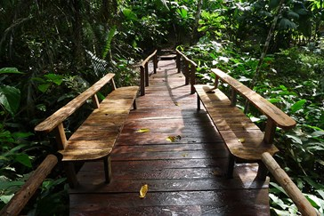 Discover The Rainforest
